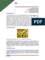 Informe Práctico Nº 1 Micro Print