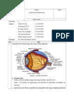 LKM-Sistem-Indera.doc