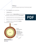 Anatomy of the GI Tract.docx