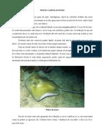 Peştii Cartilaginoşi Si Peştii Osoşi