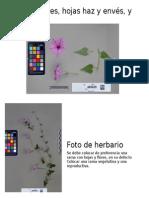 Foto de Flores, Hojas Haz y Envés