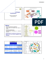 Tema_2_Taxonomia_y_Morfologia_bacteriana._Microscipio._Tincion_de_Gram_.pdf