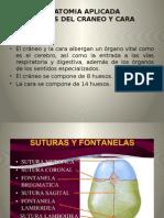 Anatomia Aplicada II