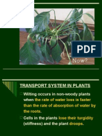 TRANSPORT SYSTEM IN PLANTS.ppt