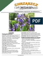 Chrząszcz - Czerwiec 2015 (Nr 111)