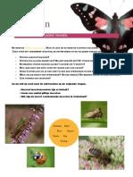webwandeling_insecten