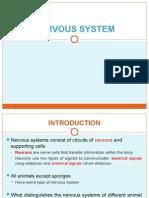2.7 Nervous System (1)