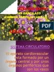 SISTEMA CIRCULATORIO.pdf