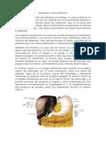 Abdomen y Retro Peritoneo
