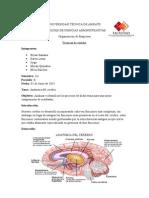 anatomia-del-crebro-tecnicas.docx