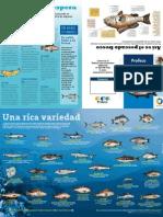 Guía para consumir pescado
