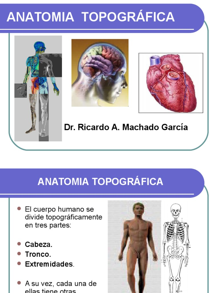 Anatomia Topogr Fica