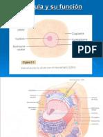 2. La célula y su función.ppt
