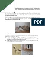 Tipos de lesiones.pdf