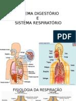SDR - sistema digestorio e respiratorio
