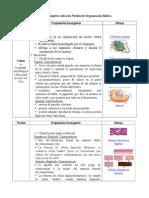 Organización Biotica Niveles Ciencias