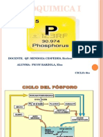 Fosforo Bioquimica 1