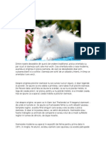 Pisicile Referat.clopotel.dasdsad