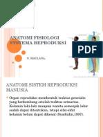 Anatomi Fisiologi Sistema Reproduksi