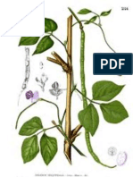 Pollination and yield attributes of (cowpea) Vigna unguiculata L. Walp. (Fabaceae)as influenced by the foraging activity of Xylocopa olivacea Fabricius (Hymenoptera