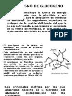 Metabolismo de Glucogeno
