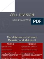 Comparison Mitosis and Meiosis