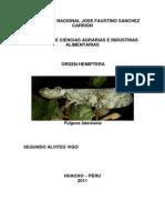 Orden Hemiptera (5)