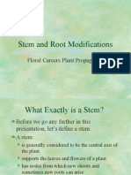 Stem and Root Modifications