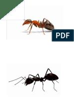 Ants 2015