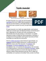 Tejido Muscular (1)