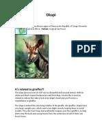 3a - DRC - Okapi