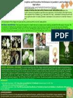 poster มะลิ.pptx