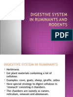 Digestive System in Ruminants and Rodents