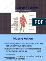 10-3 the Muscular System Student Version