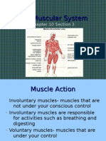 10-3 the Muscular System