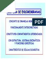 12. Sistema de Endomembranas. RER.rel