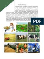 Sector Primario, Secundario y Terciario. Agricultura en Guatemala