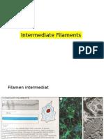 Intermediete Filament