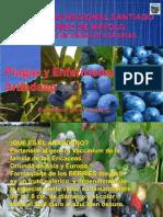135285540-6-2-Plagas-y-enfermedades-del-arandanp-pptx