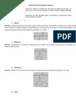 Aminoácidos Del Organismo Humano