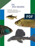 Guia de Peces de Rio Negro