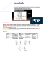 Generalidades de Anatomia.pdf