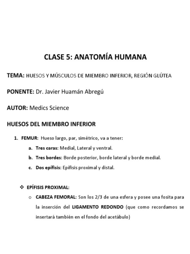 Anatomia Humana - Huesos, Musculos y Region Glutea
