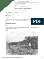 Normas Para El Cultivo de La Caña de Azúcar