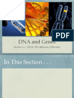 DNA and Genes Presentation - Biology Chapter 11