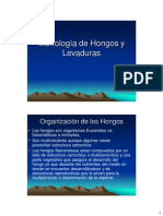 Morfologia de Hongos y Levaduras