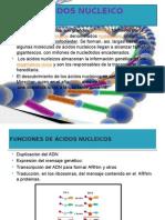 Acidos Nucleico Trabajo