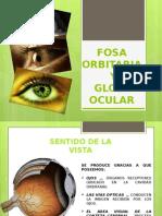 1. Fosa Ocular, Nasal y Bucal (Anatomía)