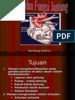 118118696 Struktur Dan Fungsi Jantung Ppt Revisi