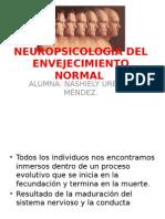Neuropsicología Del Envejecimiento Normal